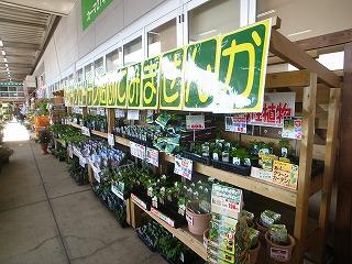 今年も、緑のカーテン_f0059988_11284477.jpg