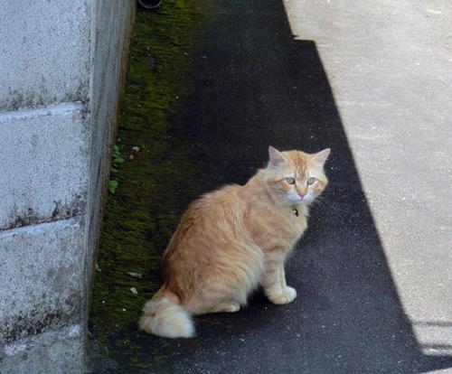 5月8日  諸数のボス猫_e0104695_2074426.jpg