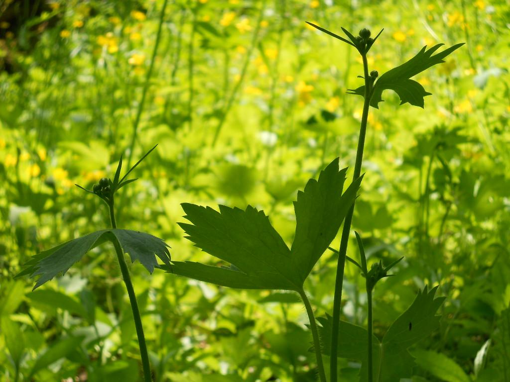 森や野原のなかに~song of Green II ~♪_f0146802_0303431.jpg