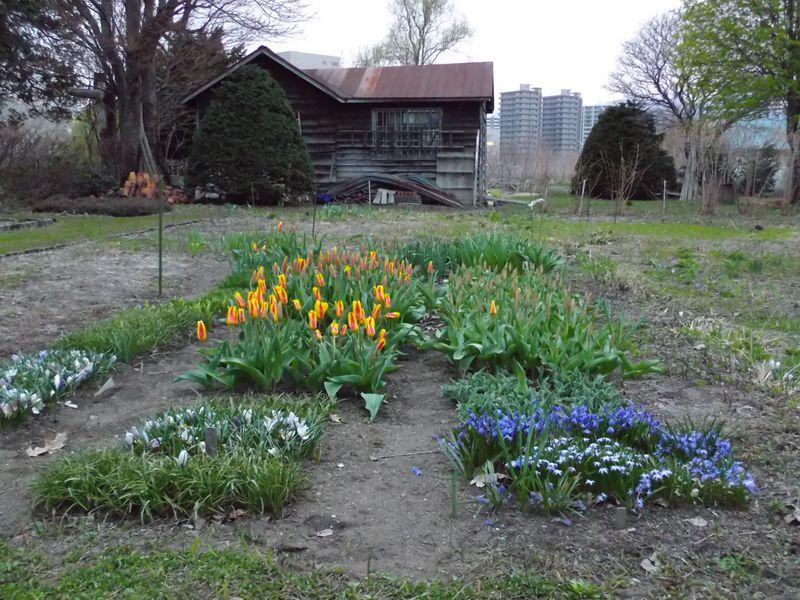 春はどこに_c0025115_19415288.jpg