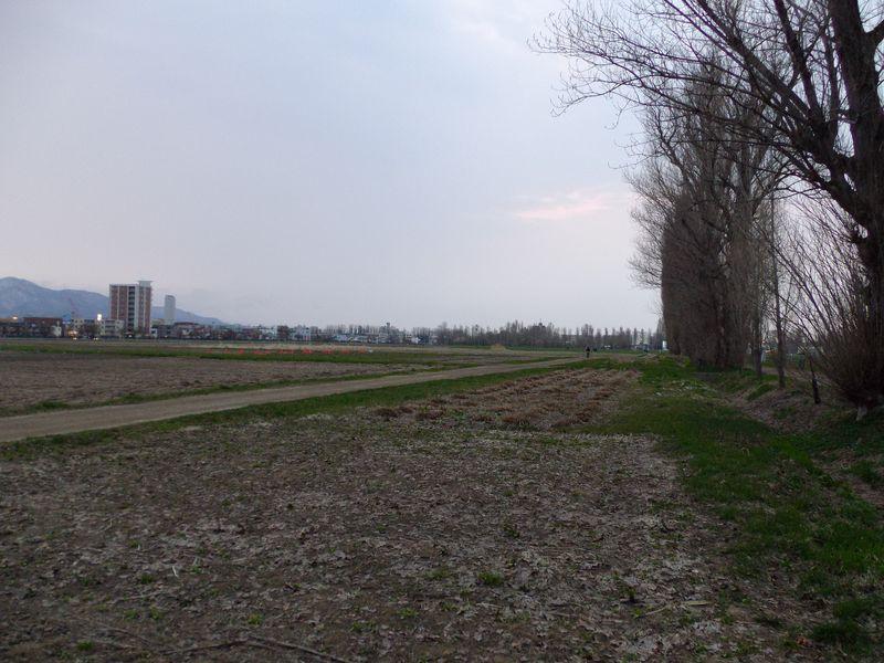 春はどこに_c0025115_1941546.jpg