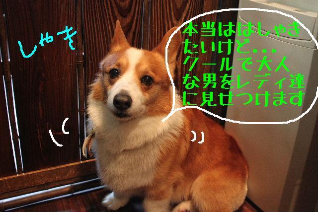 b0130018_230119.jpg