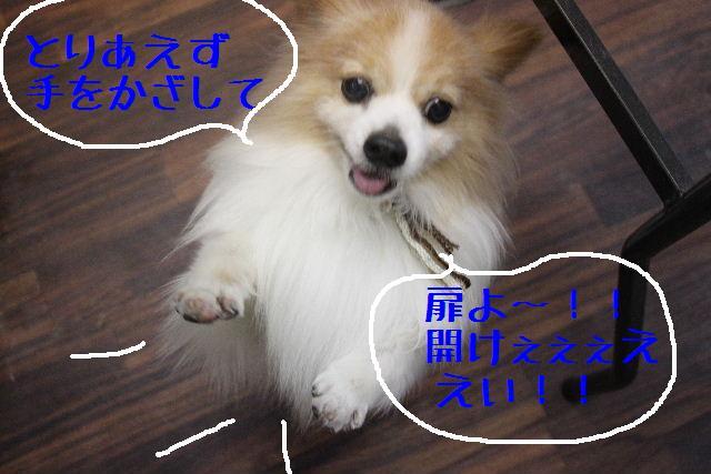 b0130018_231379.jpg