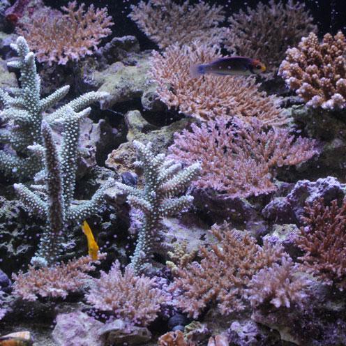 海水魚アップしました。_d0221436_19535754.jpg