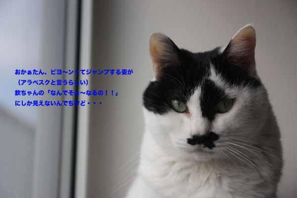 b0223446_1734713.jpg