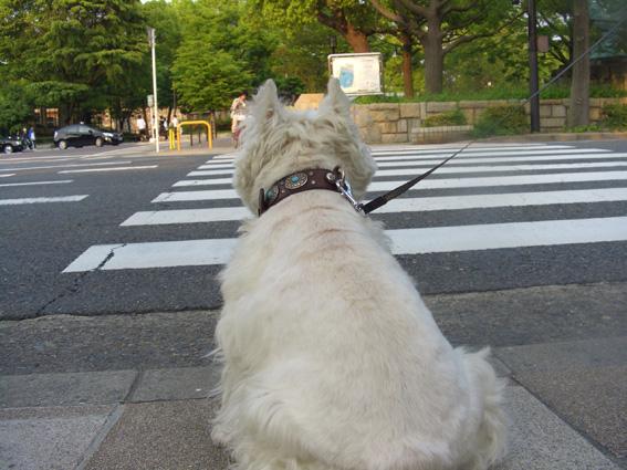 祝日散歩。_b0107163_2114389.jpg