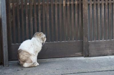 傷だらけの猫人生_c0193077_11474678.jpg