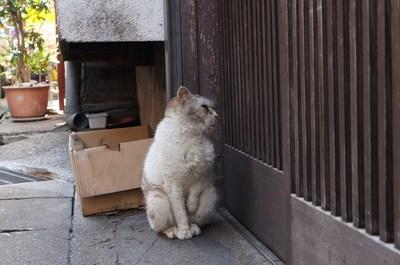 傷だらけの猫人生_c0193077_11481276.jpg