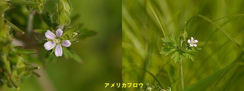 散歩中の花たち_b0175688_8324938.jpg