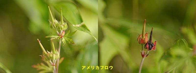 散歩中の花たち_b0175688_8325996.jpg