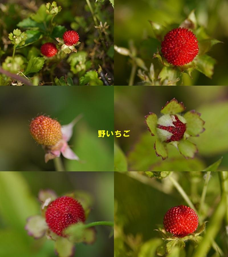 散歩中の花たち_b0175688_8331349.jpg