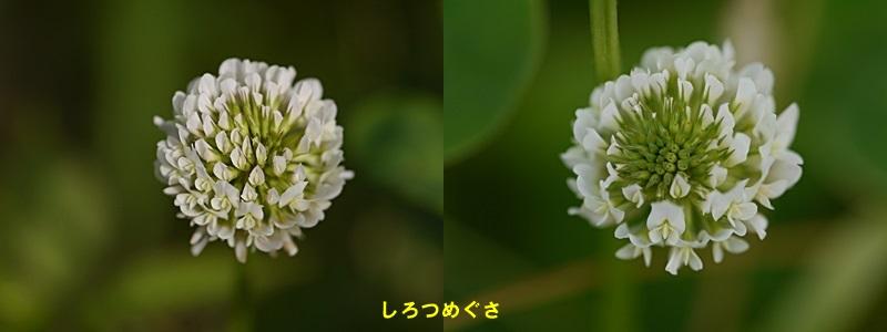 散歩中の花たち_b0175688_8332867.jpg