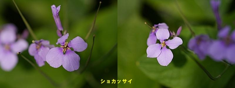 散歩中の花たち_b0175688_8334261.jpg