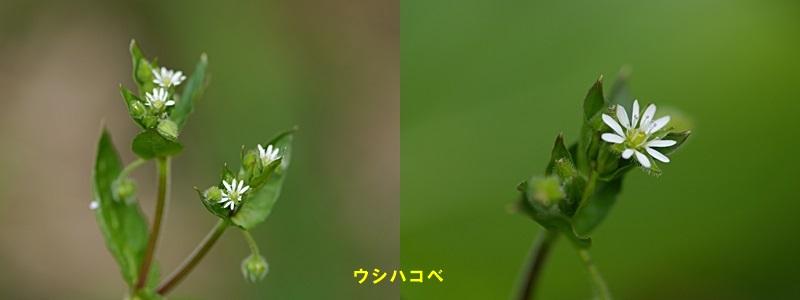 散歩中の花たち_b0175688_8335778.jpg