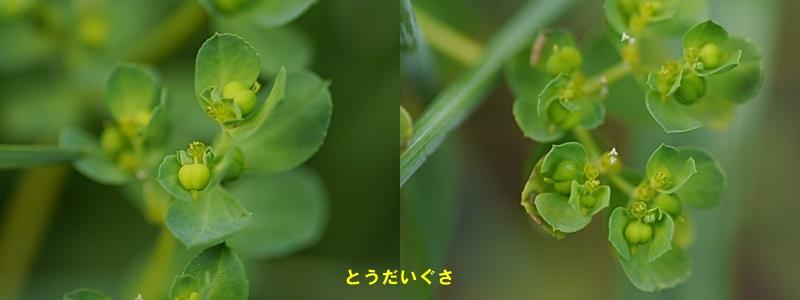 散歩中の花たち_b0175688_8341044.jpg