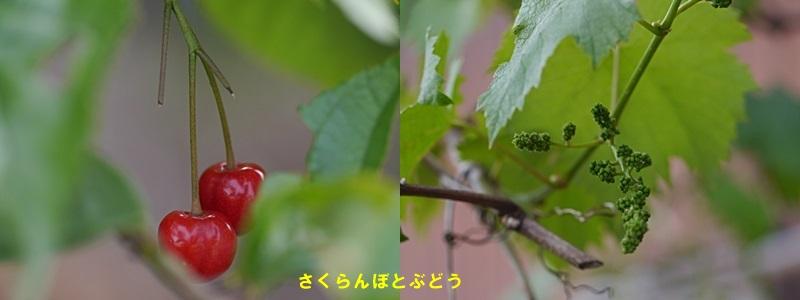 散歩中の花たち_b0175688_8342330.jpg