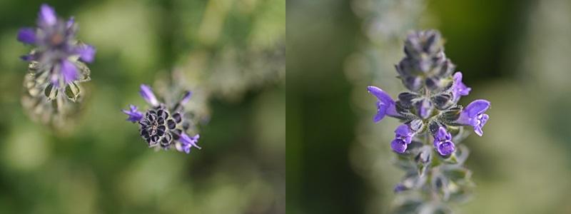 散歩中の花たち_b0175688_8343597.jpg