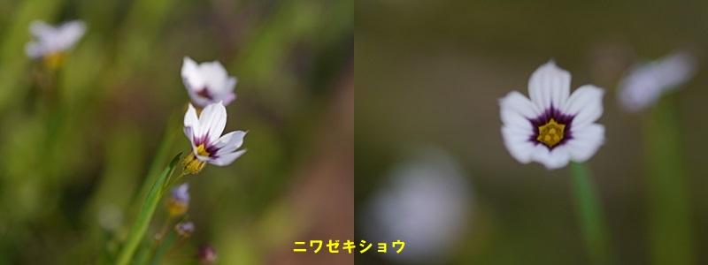 散歩中の花たち_b0175688_8344414.jpg