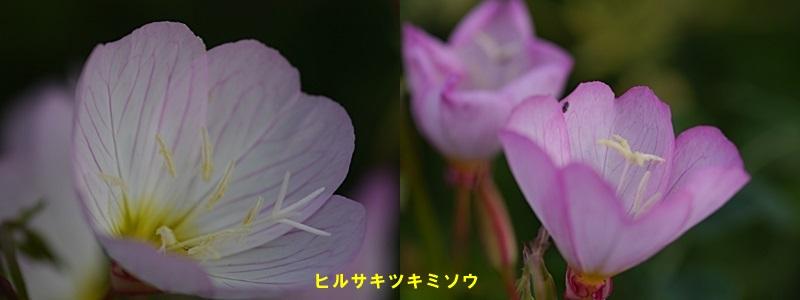 散歩中の花たち_b0175688_8345375.jpg
