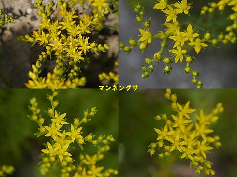 散歩中の花たち_b0175688_835783.jpg