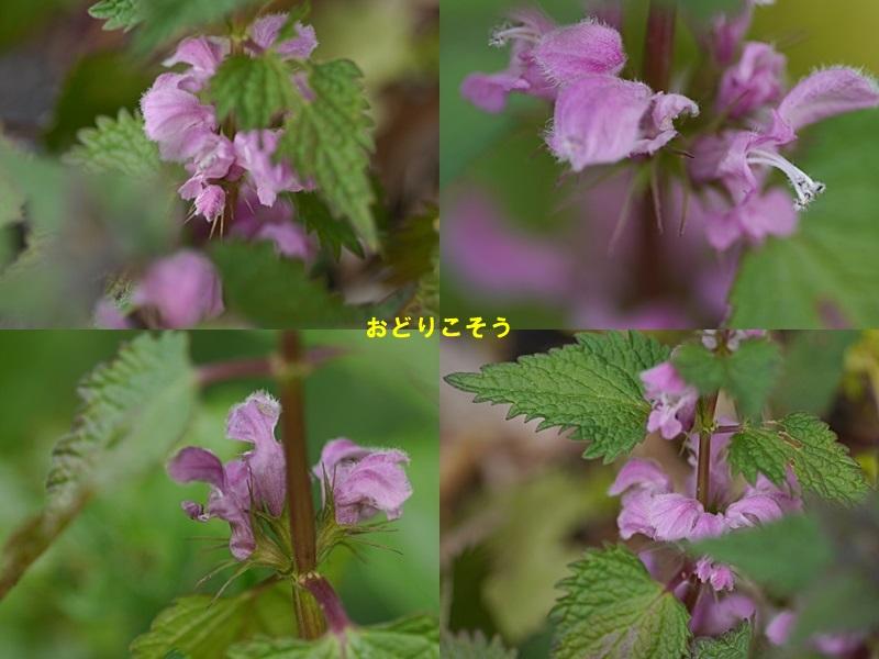 散歩中の花たち_b0175688_8392668.jpg