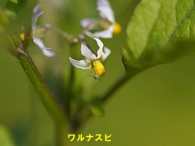 散歩中の花たち_b0175688_8431684.jpg