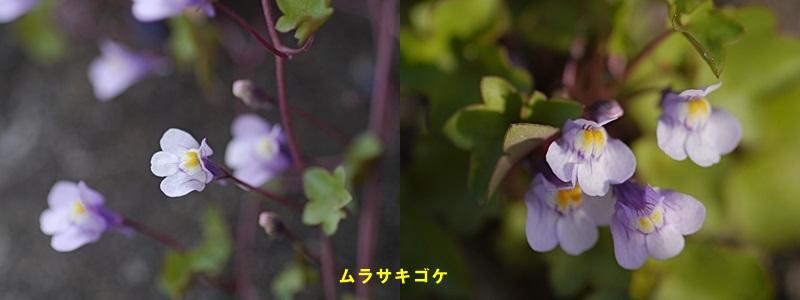 散歩中の花たち_b0175688_856412.jpg