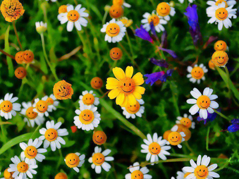 植物・庭の世界 62_f0213189_18512821.jpg