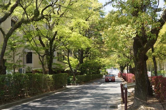 夢を現実にする関西学院大学、孫娘と関西学院大学へ、日本・韓国・中国の環境協力、復興策に日本木材を_d0181492_1174062.jpg