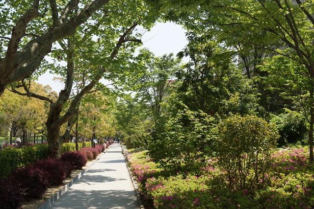夢を現実にする関西学院大学、孫娘と関西学院大学へ、日本・韓国・中国の環境協力、復興策に日本木材を_d0181492_117587.jpg