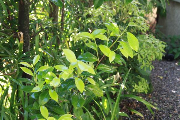 新緑の季節_e0176392_19301573.jpg