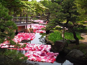 花鳥の美☆牡丹の癒し。_c0098807_20103096.jpg