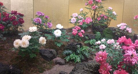 花鳥の美☆牡丹の癒し。_c0098807_20254850.jpg