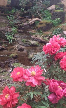 花鳥の美☆牡丹の癒し。_c0098807_20404846.jpg