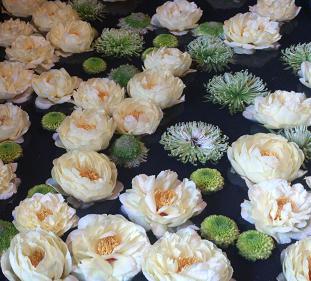 花鳥の美☆牡丹の癒し。_c0098807_20524535.jpg