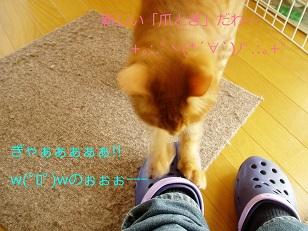 b0200310_11361358.jpg