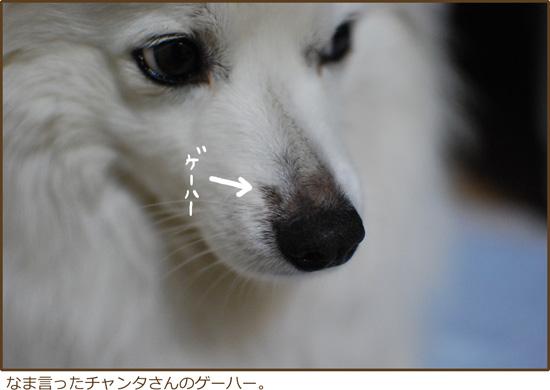 d0212419_21202149.jpg