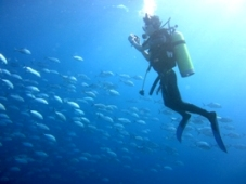 おいしそうな海!_a0043520_458127.jpg
