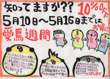 130510 インコ・文鳥・うさぎ・ハムスター _f0189122_14261022.jpg