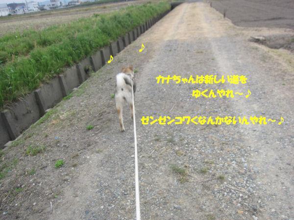 f0143123_10225452.jpg