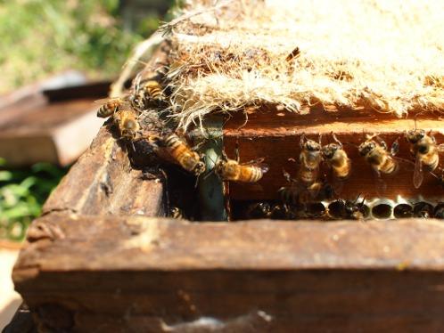蜂蜜_b0237338_1325639.jpg