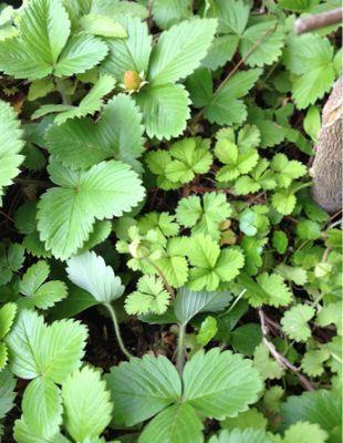 庭の植物_c0206645_17151150.jpg
