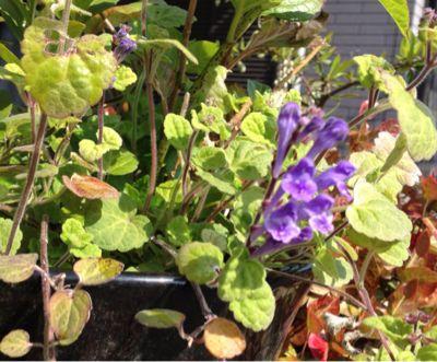 庭の植物_c0206645_1715432.jpg