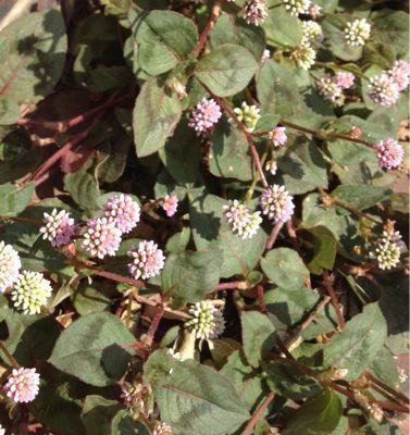 庭の植物_c0206645_1715728.jpg