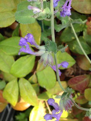 庭の植物_c0206645_1715916.jpg