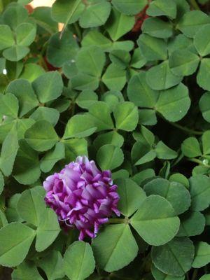 庭の植物_c0206645_1715937.jpg