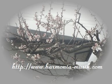 花遊び_d0165645_1262367.jpg