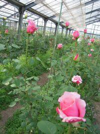 バラの花束_e0099359_10341427.jpg