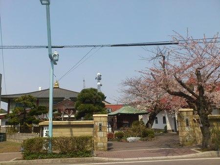 五稜郭のお寺と桜_b0106766_22593916.jpg