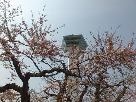 五稜郭公園から桜とタワー_b0106766_236944.jpg